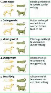 afvallen kat en hond score