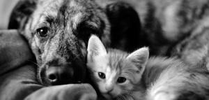 kat en hond slapen medium