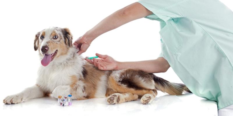 vaccinatie-hond